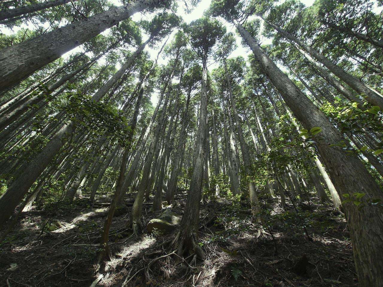 woods-70565_1280